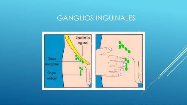 Ganglios linfaticos