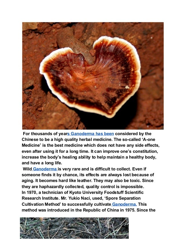 For thousands of years Ganoderma has beenconsidered by the Chinese to be a high quality herbal medicine. The so-called '...