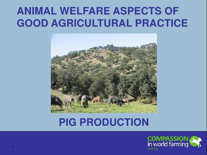 ANIMAL WELFARE ASPECTS OF GOOD AGRICULTURAL PRACTICE PIG PRODUCTION