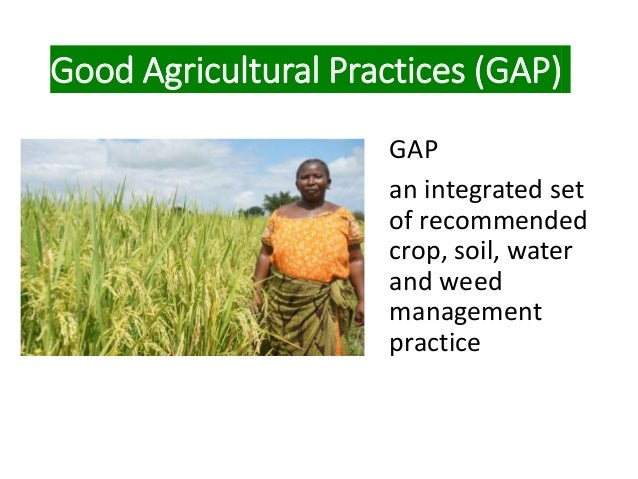 Good Agricultural Practices (GAP) GAP an integrated set of recommended crop, soil, water and weed management practice