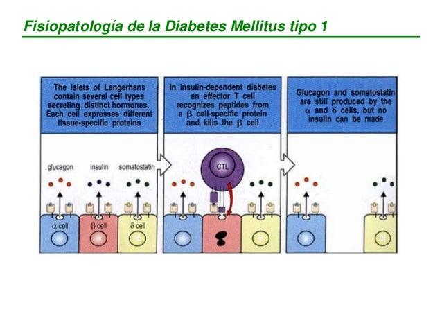 Fisiopatología de la Diabetes Mellitus tipo 1