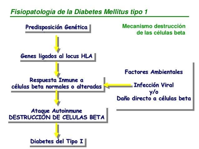 Predisposición Genética Genes ligados al locus HLA Respuesta Inmune a células beta normales o alteradas Ataque Autoinmune ...