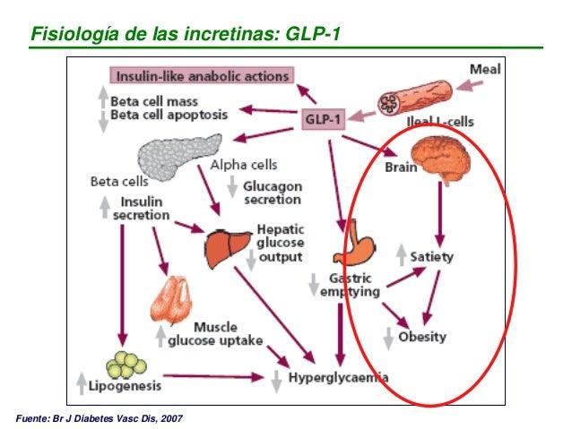 Fisiopatología de la Diabetes Mellitus tipo 2 Los efectos del GLP-1 sobre la insulina y el glucagón se ha visto que depend...