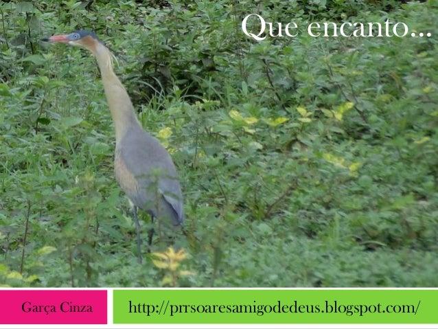 Que encanto...Garça Cinza   http://prrsoaresamigodedeus.blogspot.com/