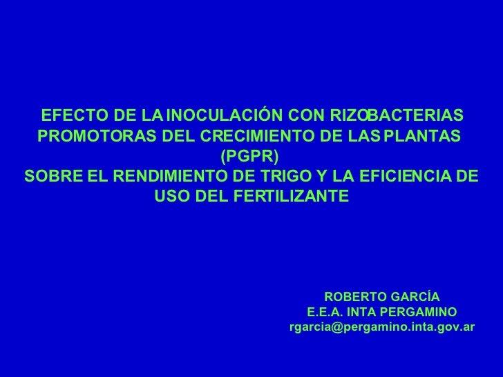 EFECTO DE LA INOCULACIÓN CON RIZOBACTERIAS  PROMOTORAS DEL CRECIMIENTO DE LAS PLANTAS  (PGPR)  SOBRE EL RENDIMIENTO DE TRI...