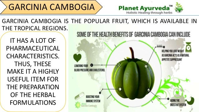 Garcinia Cambogia For Perfect Body Shape Numerous Health Benefits
