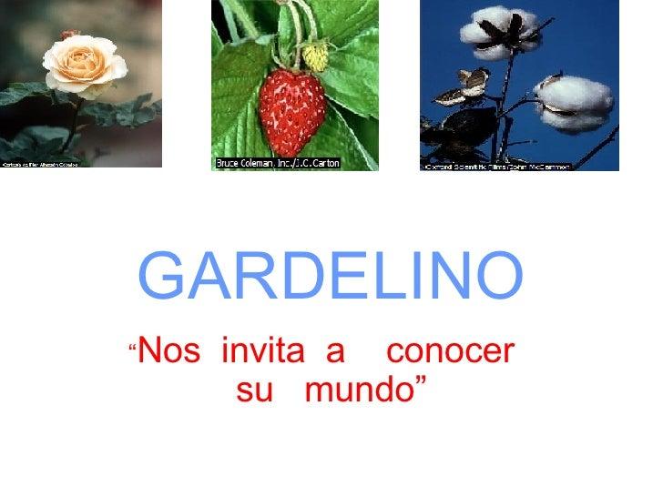 """GARDELINO """" Nos  invita  a  conocer  su  mundo""""            . ..."""