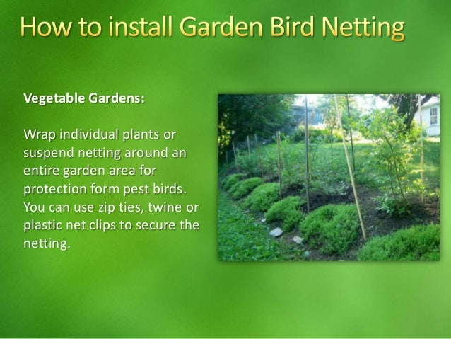 Garden Bird Netting