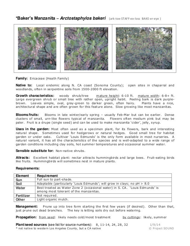 *Baker's Manzanita – Arctostaphylos bakeri (ark-toe-STAFF-ee-loss BAKE-er-eye ) Family: Ericaceae (Heath Family) Native to...