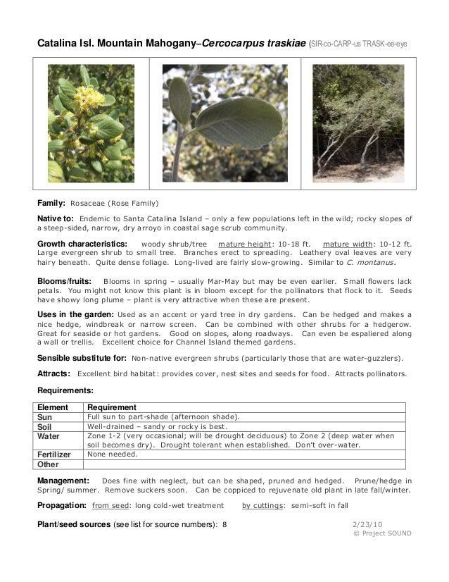 Gardening Sheet Cercocarpus Traskii