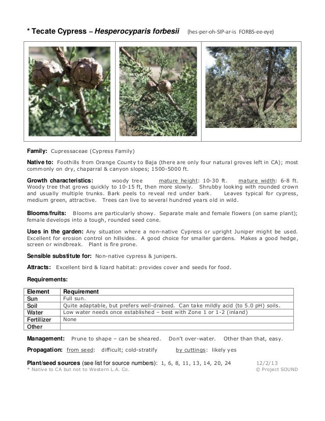 * Tecate Cypress – Hesperocyparis forbesii  (hes-per-oh-SIP-ar-is FORBS-ee-eye)  Family: Cupressaceae (Cypress Family) Nat...