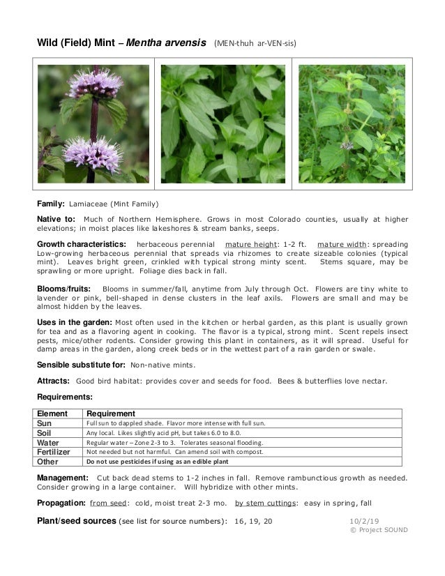 Wild (Field) Mint – Mentha arvensis (MEN-thuh ar-VEN-sis) Family: Lamiaceae (Mint Family) Native to: Much of Northern Hemi...