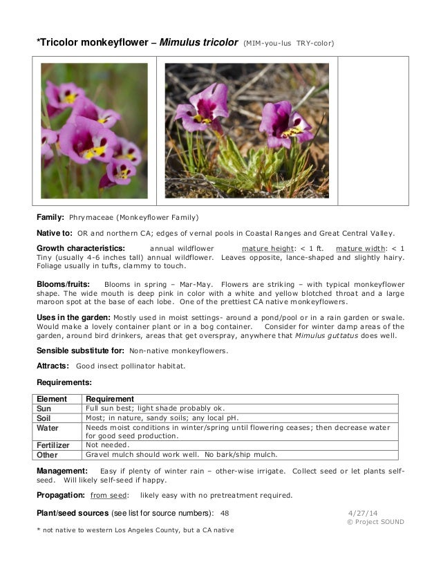 *Tricolor monkeyflower – Mimulus tricolor (MIM-you-lus TRY-color) Family: Phrymaceae (Monkeyflower Family) Native to: OR a...