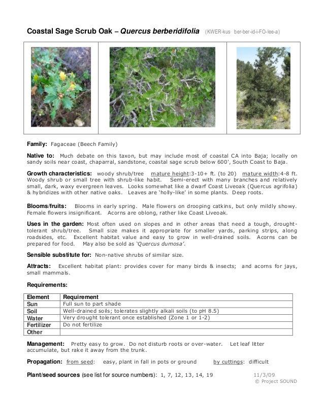 Coastal Sage Scrub Oak – Quercus berberidifolia (KWER-kus ber-ber-id-i-FO-lee-a) Family: Fagaceae (Beech Family) Native to...