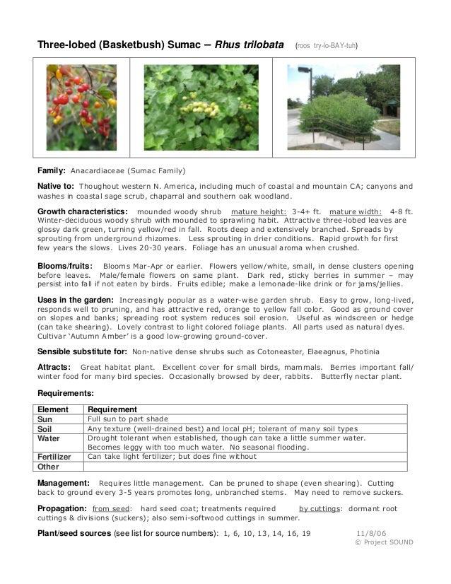 Three-lobed (Basketbush) Sumac – Rhus trilobata  (roos try-lo-BAY-tuh)  Family: Anacardiaceae (Sumac Family) Native to: Th...