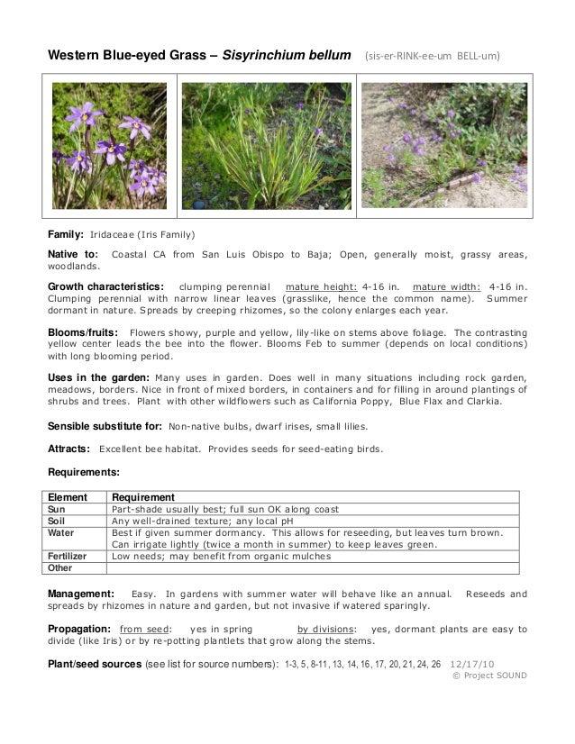 Western Blue-eyed Grass – Sisyrinchium bellum (sis-er-RINK-ee-um BELL-um) Family: Iridaceae (Iris Family) Native to: Coast...