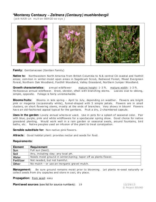 *Monterey Centaury – Zeltnera (Centaury) muehlenbergii (zelt-NAIR-uh mull-en-BERGE-ee-eye )  Family: Gentianaceae (Gentian...