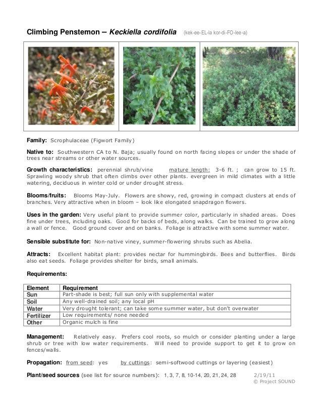 Climbing Penstemon – Keckiella cordifolia (kek-ee-EL-la kor-di-FO-lee-a)  Family: Scrophulaceae (Figwort Family)  Native t...