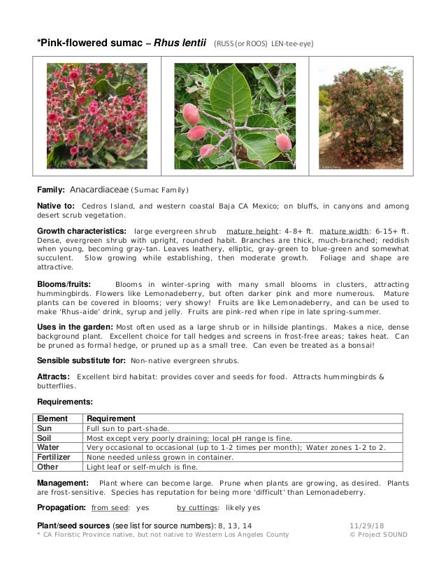 Gardening Sheets Evergreen Shrubs