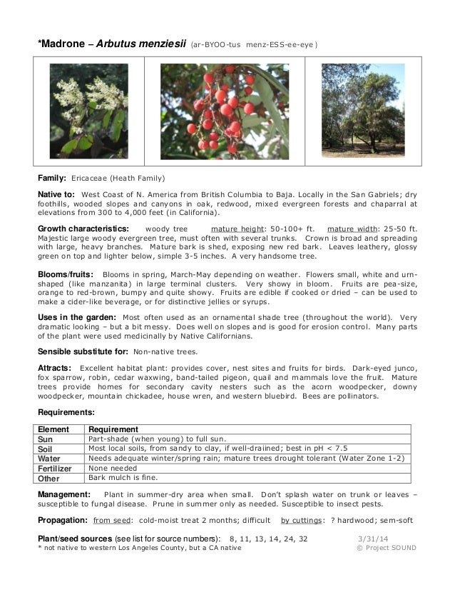 *Madrone – Arbutus menziesii (ar-BYOO-tus menz-ESS-ee-eye ) Family: Ericaceae (Heath Family) Native to: West Coast of N. A...