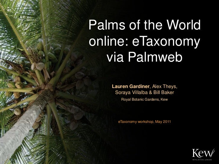 Palms of the World online: eTaxonomy    via Palmweb<br />Lauren Gardiner, Alex Theys,            Soraya Villalba & Bill Ba...