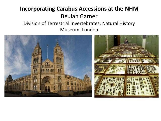 Incorporating Carabus Accessions at the NHM Beulah Garner Division of Terrestrial Invertebrates. Natural History Museum, L...