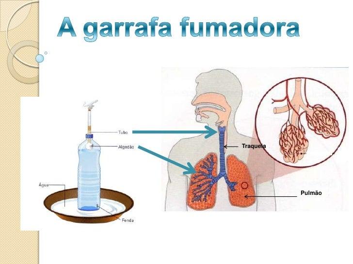 A garrafa fumadora<br />Traqueia <br />Pulmão<br />