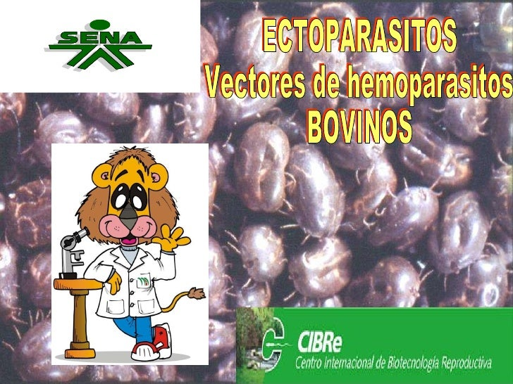 ECTOPARASITOS Vectores de hemoparasitos BOVINOS