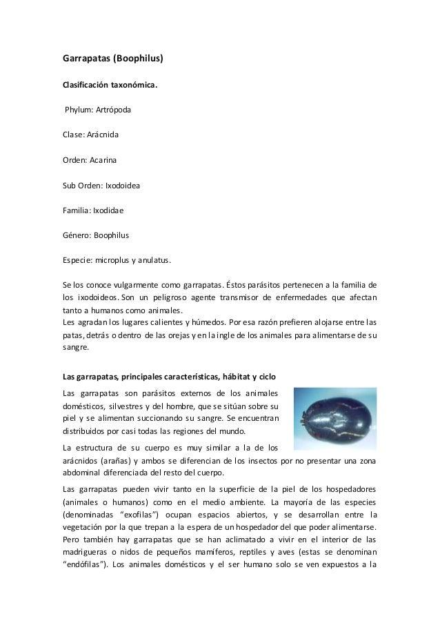 Garrapatas (Boophilus) Clasificación taxonómica. Phylum: Artrópoda Clase: Arácnida Orden: Acarina Sub Orden: Ixodoidea Fam...