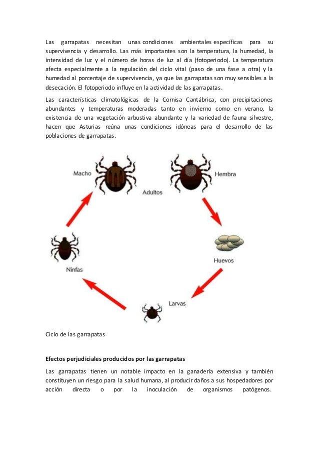 Las garrapatas necesitan unas condiciones ambientales específicas para su supervivencia y desarrollo. Las más importantes ...