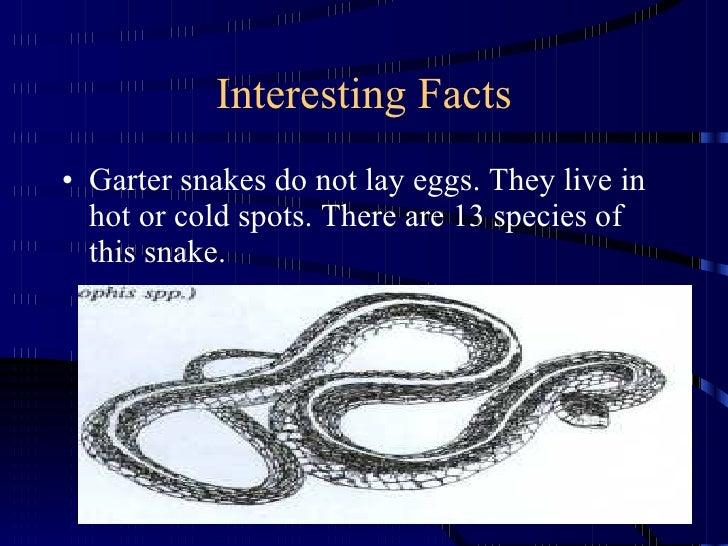 Garter Snake by A J Delorme