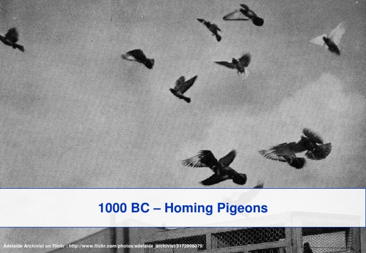 1000 BC – Homing Pigeons<br />Adelaide Archivist on Flickr : http://www.flickr.com/photos/adelaide_archivist/3172908079/<b...