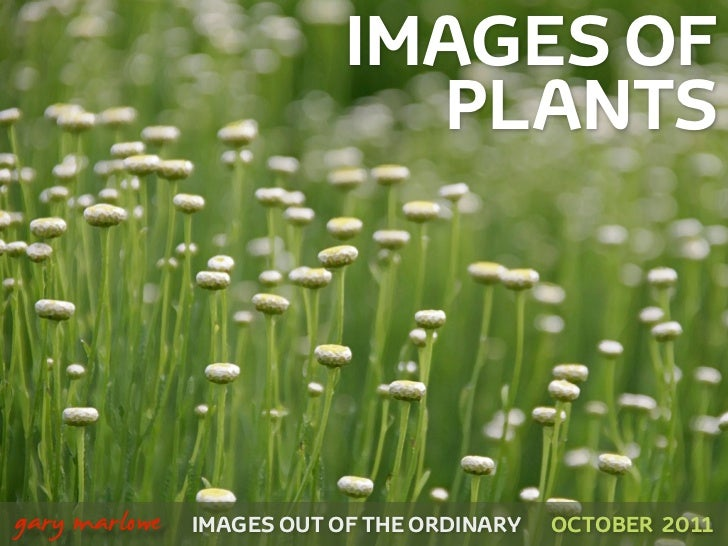 IMAGES OF                                 PLANTS!    gary marlowe   IMAGES OUT OF THE ORDINARY   OCTOBER 2011