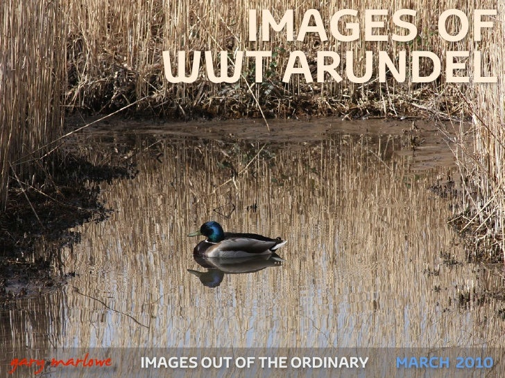 IMAGES OF                     WWT ARUNDEL    !        gary marlowe   IMAGES OUT OF THE ORDINARY MARCH 2010