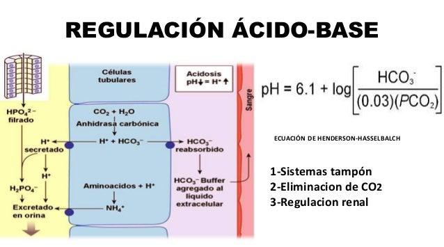 REGULACIÓN ÁCIDO-BASE ECUACIÓN DE HENDERSON-HASSELBALCH 1-Sistemas tampón 2-Eliminacion de CO2 3-Regulacion renal