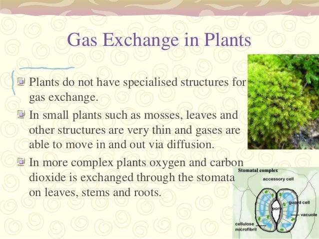 relationship between gas exchange in plants and animals
