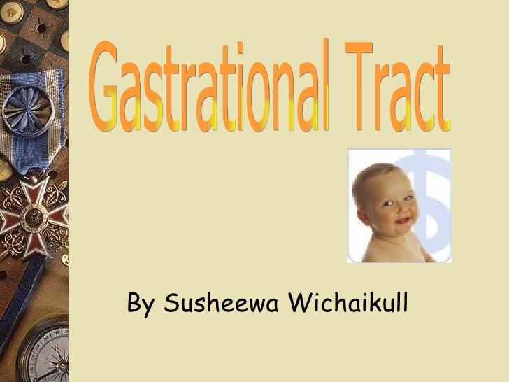 Gastrational Tract By Susheewa Wichaikull
