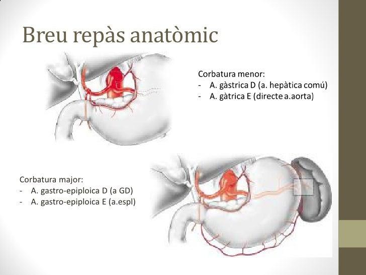 Breu repàs anatòmicCorbatura major:- A. gastro-epiploica D (a GD)- A. gastro-epiploica E (a.espl)