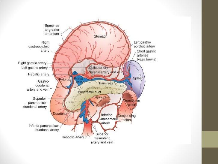 Linfadenectomia gastrectomia subtotal: D1 vs D2