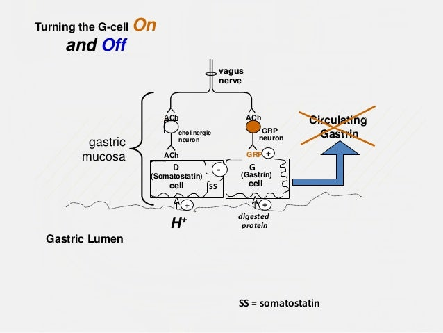 Gastrointestinal endocrine system ppt