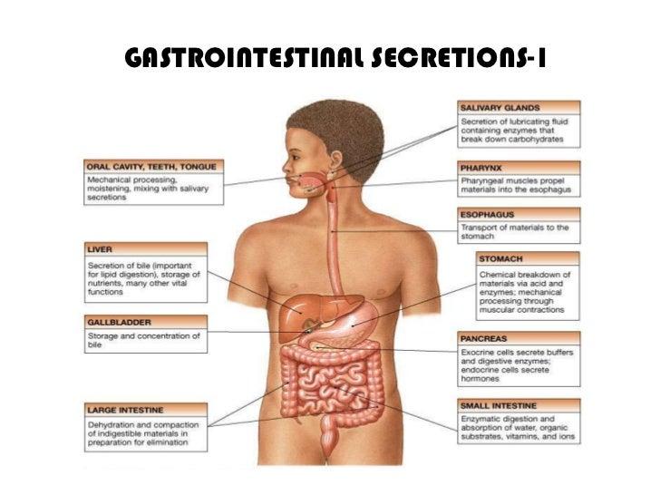 GASTROINTESTINAL SECRETIONS-1