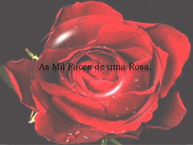 As Mil Faces de uma Rosa.