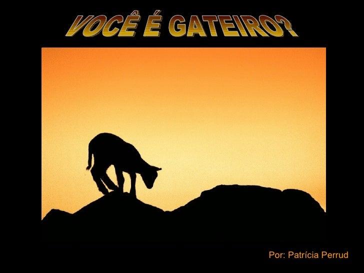 VOCÊ É GATEIRO? Por: Patrícia Perrud