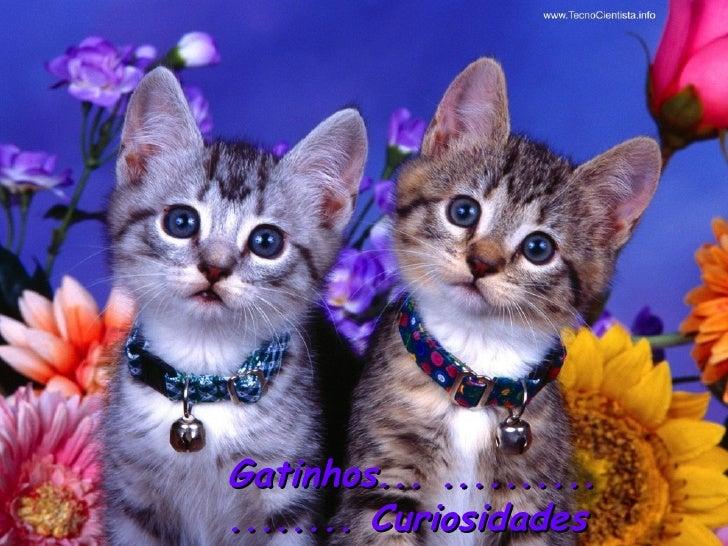 Gatinhos... .......... ........ Curiosidades