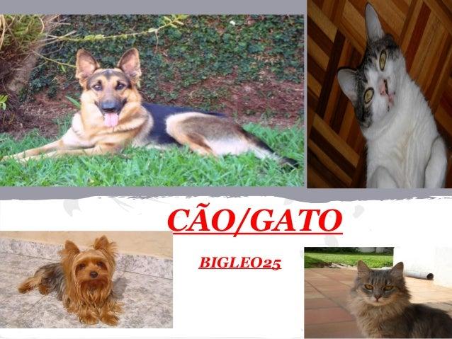 CÃO/GATOBIGLEO25