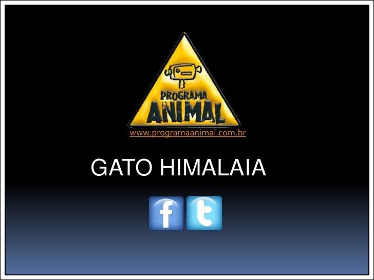 www.programaanimal.com.brGATO HIMALAIA