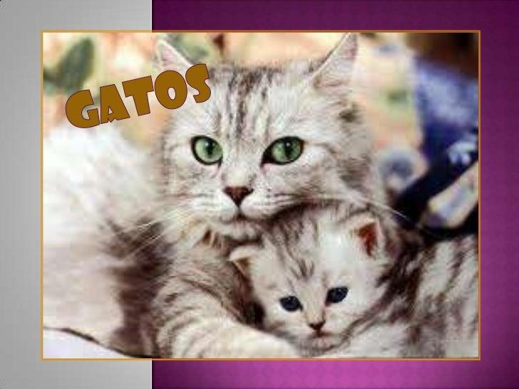 Gatos<br />