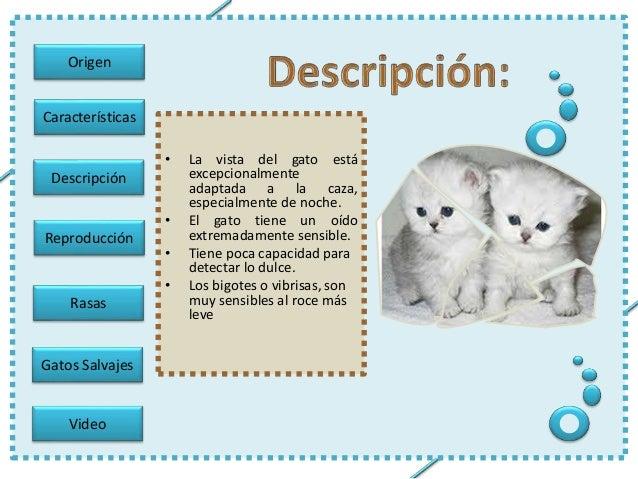 Gatos - Fundas para unas de gato ...