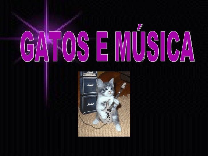 GATOS E MÚSICA