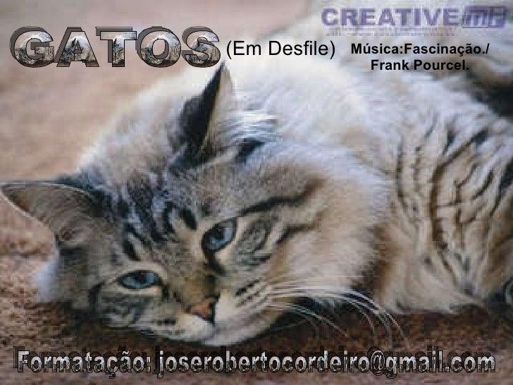 GATOS (Em Desfile) Formatação: joserobertocordeiro@gmail.com Música:Fascinação./ Frank Pourcel.